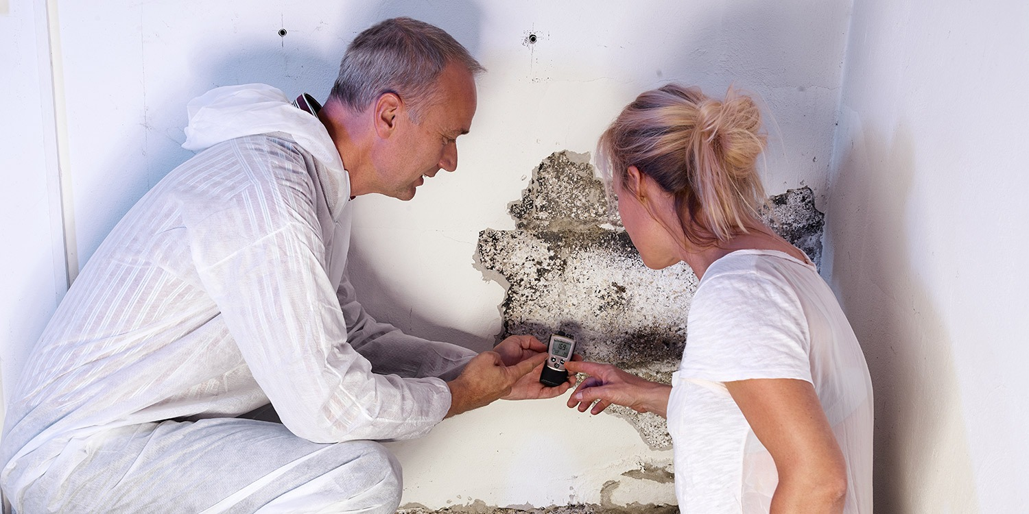 Public adjuster inspecting mold in a house